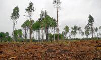 Sveaskogs slutavverkningsskogar krymper snabbt