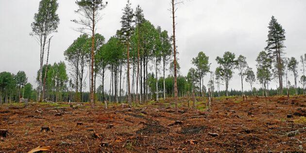 Hårt hugget i statlig skog – ger problem på sikt