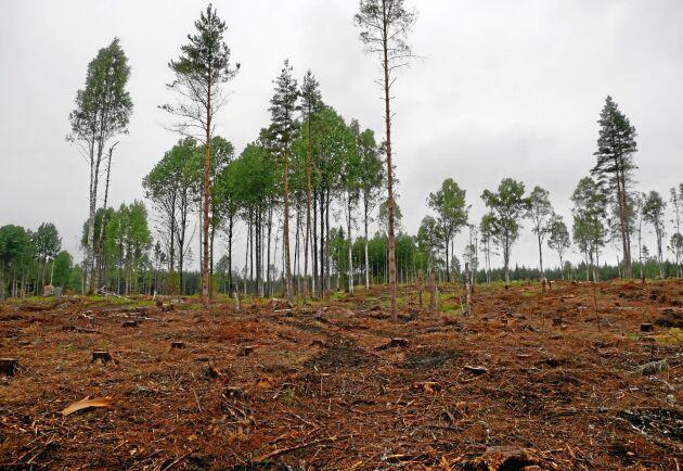 För Sverige som helhet är 62 procent av skogen, exklusive formella avsättningar, yngre än 60 år.