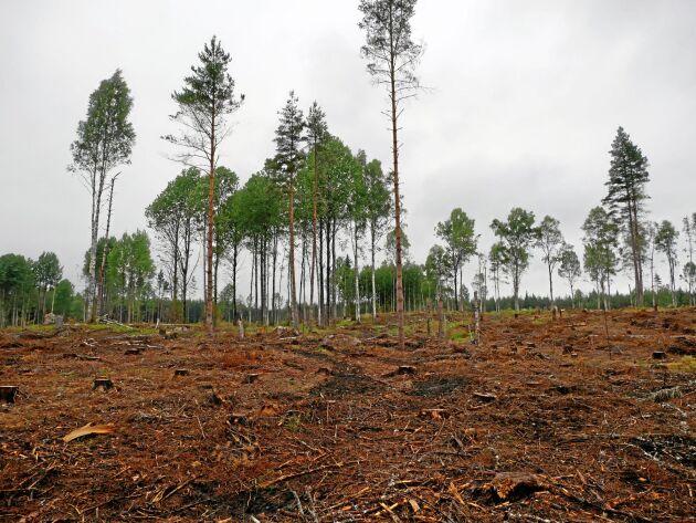 De senaste tio åren har Sveaskog ökat uttaget både i volym och andel av tillväxten, och arealerna med slutavverkningsskog har minskat snabbt.