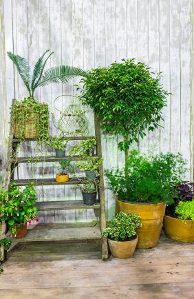 Grönskande växtstege.