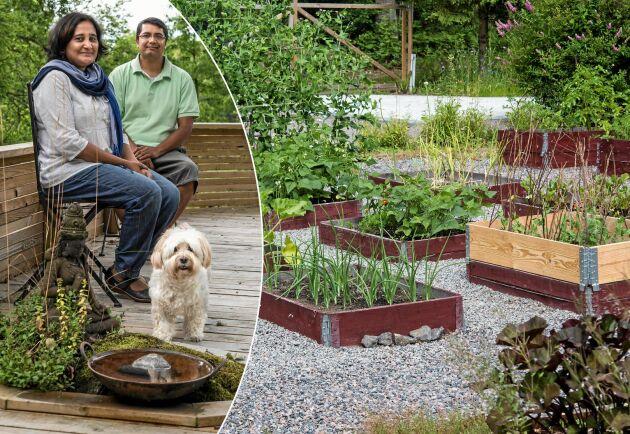 Manu och Abhay med sin hund Joey i sommarstugan. Här trivs de och odlar i sina pallkragar.