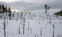 Sveaskog överklagar avslag på helikopterjakt