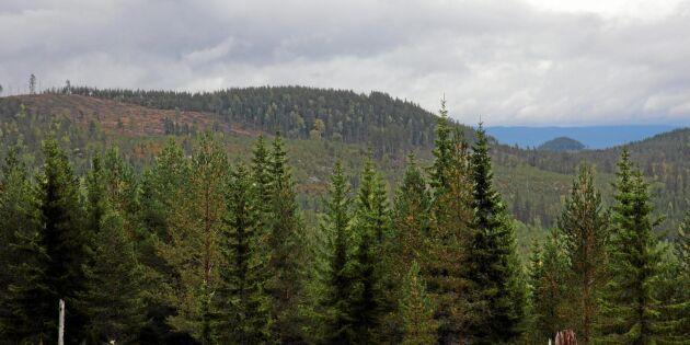 Fortsatt uppåt för skogspriserna