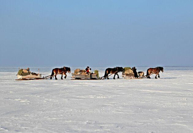 Forkörning är en flera hundra år gammal tradition av att frakta varor med häst och släde.