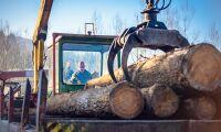 Skogsarbete sysselsätter fler