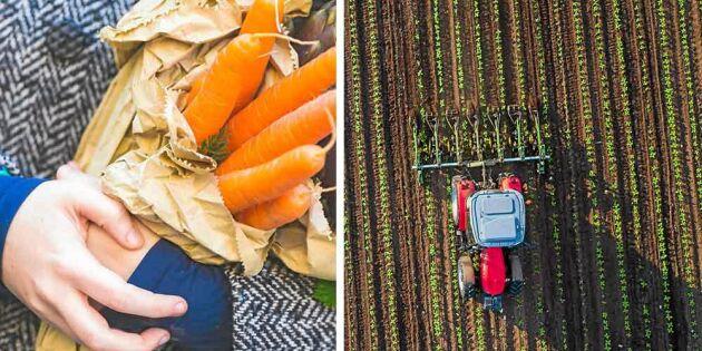 Handla direkt av bonden – finska trenden tar Sverige med storm