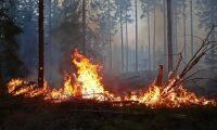 Experten: Skogsägare kan bli bättre på brandskydd