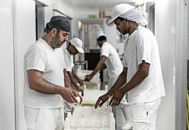 Saied Rajb och Melake Teklesenber jobbar i mejeriet och lär sig hantverksmässigt framställd ost.