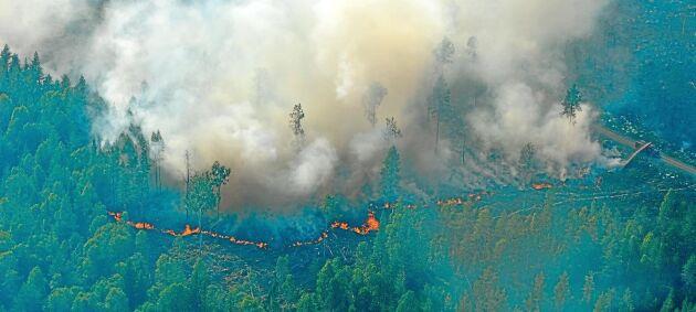 Nästa vecka är det stor internationell skogsbrandsövning i Kiruna. Så här såg det ut vid branden runt Ljusdal.