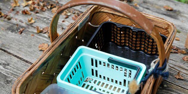 Så inreder du svampkorgen – och underlättar rensningen!