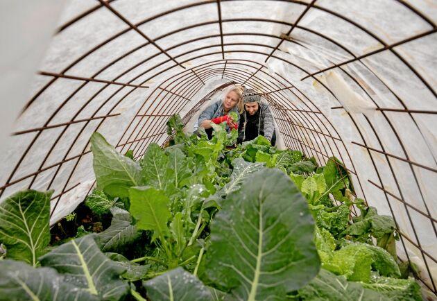 För första gången sker nu en ökning av antalet små gårdar på landet.