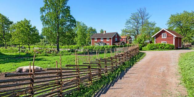 Vilket är landsbygdens vackraste ord? Här är 10 förslag