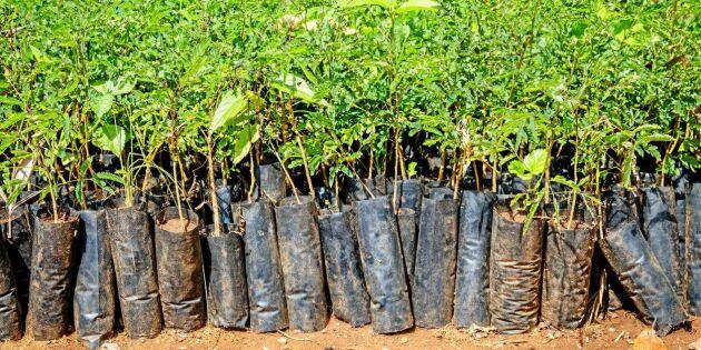 Etiopien slår världsrekord i trädplantering