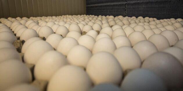 """Giftskandalen: """"Ät inga ägg"""""""