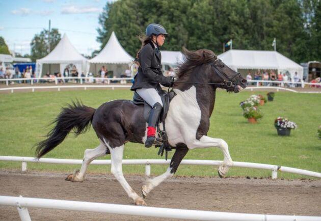 En tävlingshäst kan ofta vara bästa hästen för den mindre erfarna islandshästryttaren menar Heimir Gunnarsson. Arkivbild från SM 2016.