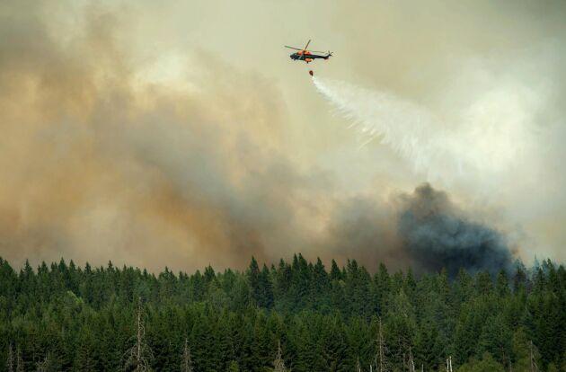 Helikopter vattenbombar utanför Gammelby där boende tvingas att lämna sina hem efter att räddningsledningen beslutat att hela byn skall evakueras. Skogsbranden väster om Sala fortsätter.