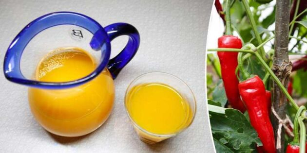 Vinterns hälsokur: Chilispetsad apelsinjuice med gurkmeja