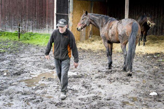 60 millimeter regn har fallit på kort tid. Ändå sjunker varken Hans-Ove Skogh eller hästarna ner nämnvärt. Länsstyrelsen vill dock att ytan ska hårdgöras och dräneras ytterligare.