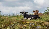 Våga tala om mjölkens dåliga lönsamhet