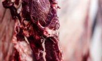 Slakterierna avvaktar prishöjning trots köttbrist
