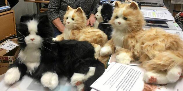 Robotkatterna gör de äldre trygga och lugna – som vanliga katter