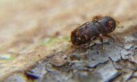 Statens passivitet mot barkborren är förödande