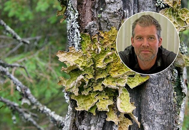 Bild på lunglav samt Erik Hjärtfors, skogsägare och mångbrukare.