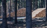 Hållbart skogsbruk röner intresse på Nasdaq