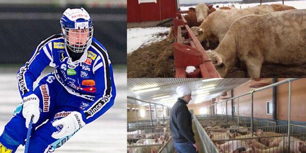 Bonden tar tjuren vid hornen: Jag vill ta hem SM-bucklan till Lidköping
