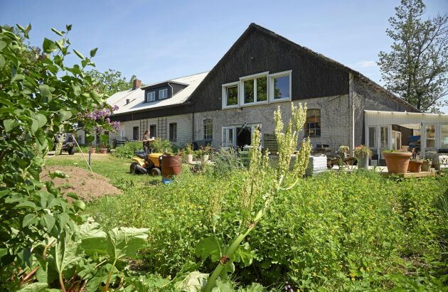 Deras hus är renoverat och tillbyggt med hampa som material i både betong och isolering.