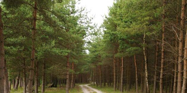 LRF: Gotland skyddar för mycket skog