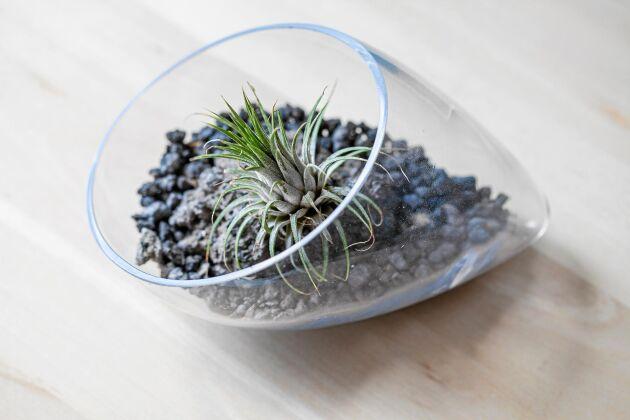 Ibland räcker det med en enda planta. Matchande grus blir fint till. Foto: Istock.