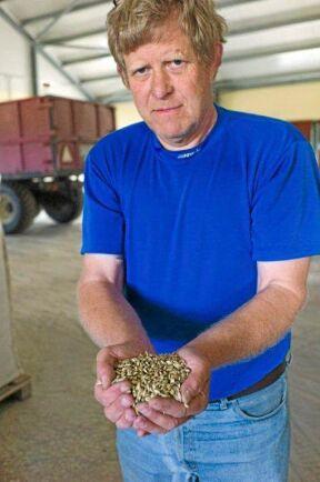 Ursprungliga spannmålssorter som Enkorn och Emmer anses klara sig förhållandevis bra mot sjukdomar, förklarar Sten Rosvall.