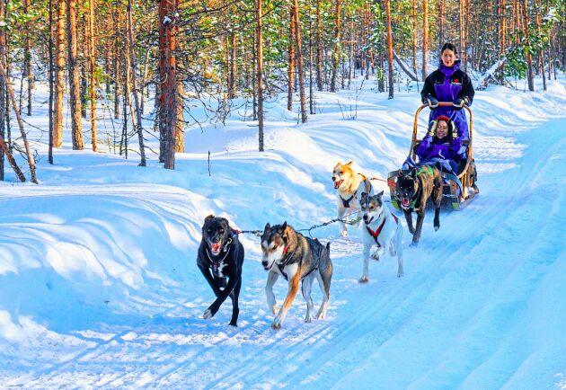En naturguide kan till exempel arbeta med att leda turer med hundspann. Nu höjs momsen för dessa.