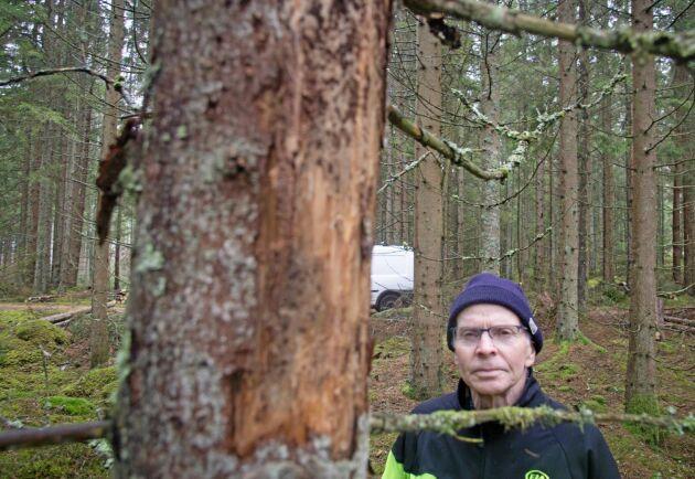 Den sextandade barkborren angriper främst yngre gallringsskog, mellan 25-50 år, berättar Göte Carlsson.