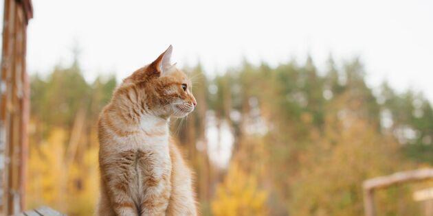 Överge katter kan bli ett brott