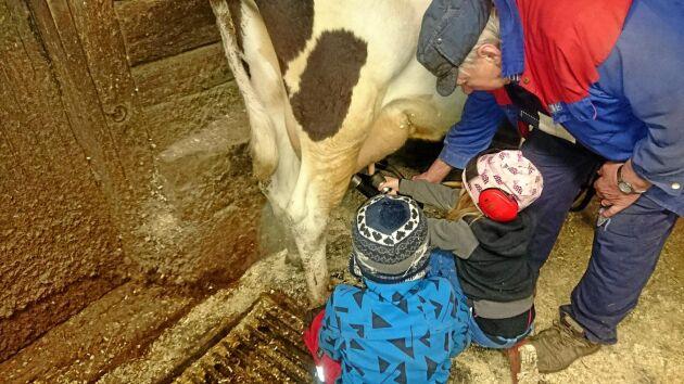 Unga bönder. På Skärvhult, Åsenhöga, Småland, kämpar Inez, 5 år och Axel, 8 år, om vem som ska få mjölka.