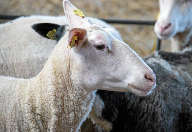 Djurägare känner sig oroliga för att ha sina djur ute på grund av stöldrisken.