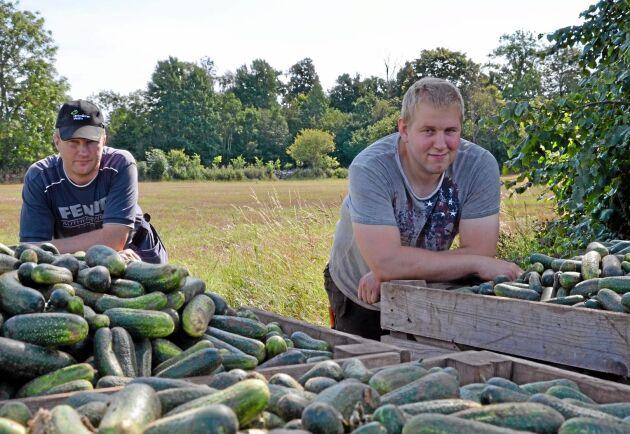 Både Johan Larsson(tv) och Gustav Edvardsson odlar västeråsgurka som är mycket vattenkrävande under odlingssäsongen.