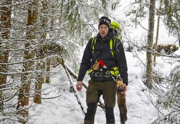Tre fångstslingor med totalt 36 fällor har Fredrik Flod utplacerade på jaktmarken. Han brukar fånga omkring 10 mårdar årligen.