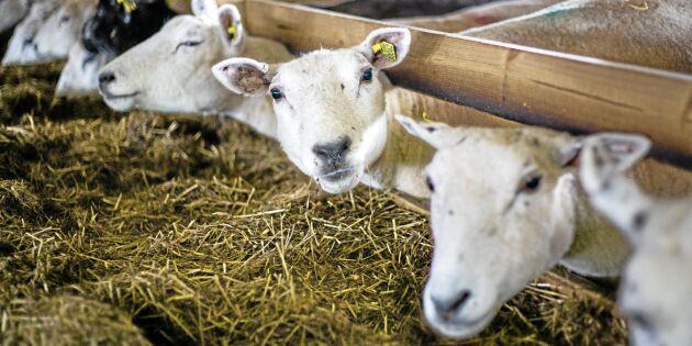 Tangará nya ägare om farmens framtid