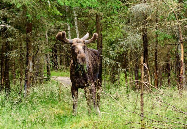 Länsstyrelsen i Västra Götalands län förlängde rapporteringstiden med tre dagar. Ändå missade 49 jaktområden att slutrapportera i tid.