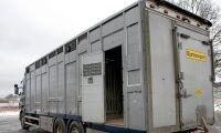 Så ska HK Scan modernisera djurtransporterna