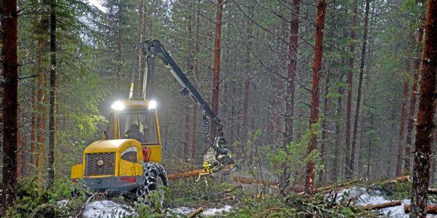Nätverket för kvinnliga skogsägare firar 20 år
