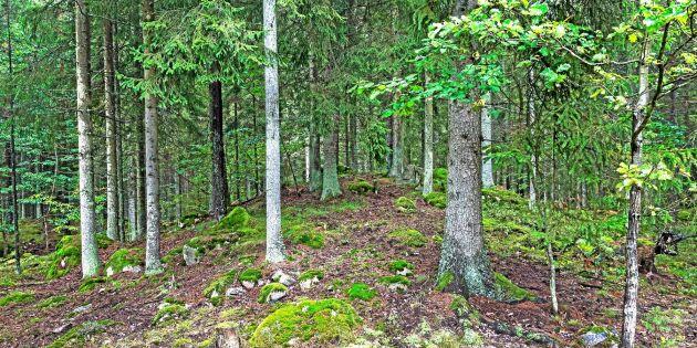 Så ska regeringen satsa på skogen