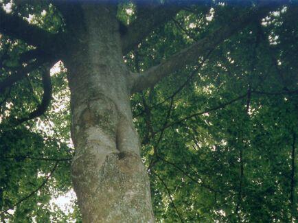 LRF Skåne ser stora risker att klimat- och miljömålen inte kan nås genom de EU-förslag som begränsar skogsbruket.