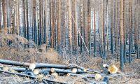 Ingen brådska i brandskogen