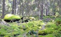 Mer skyddad skog under förra året