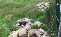 Minst 259 får illegalt slaktade i hagar